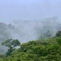 Blick über den Regenwald von Monteverde in Costa Rica