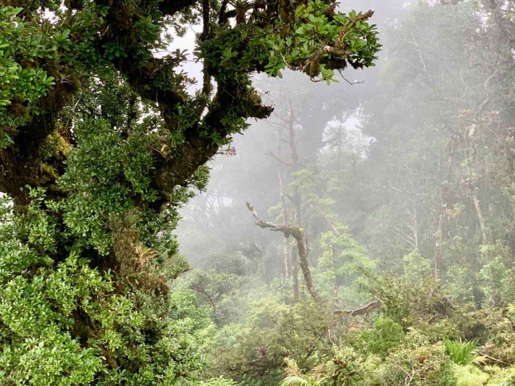 Regenwald von Monteverde