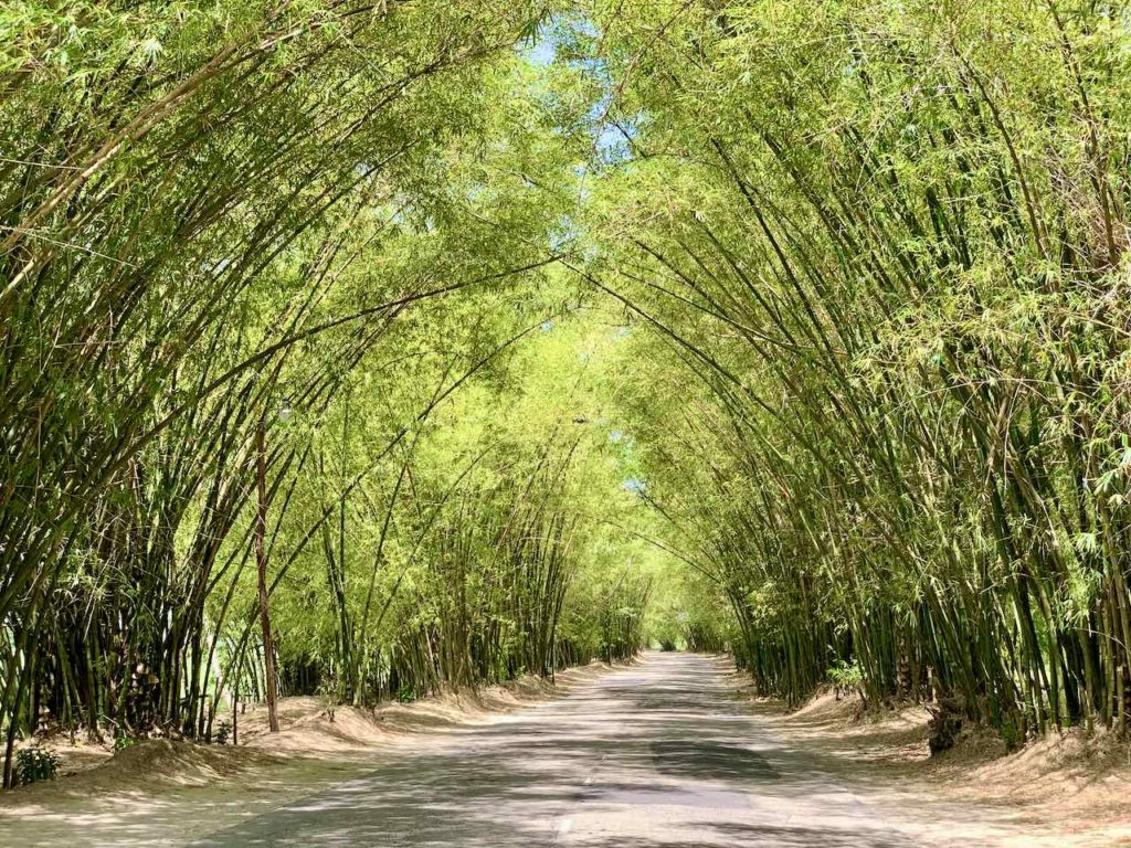 Sehenswürdigkeiten in Jamaika: Bamboo Avenue