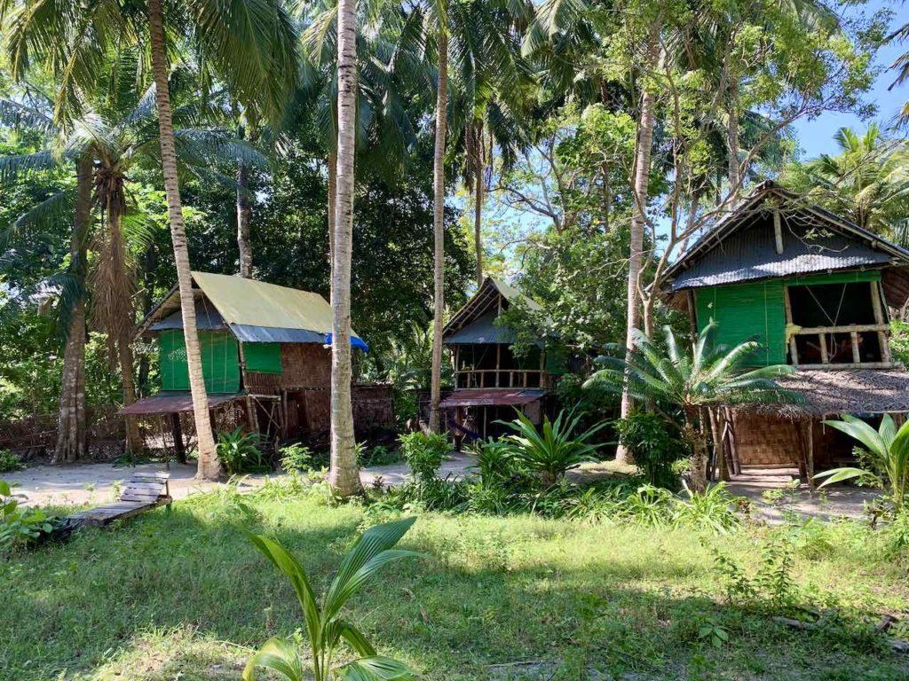 Andaman Islands: Havelock Island: Emerald Gecko