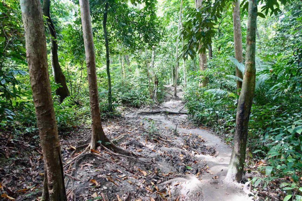 Havelock Island: Weg zum Elephant Beach