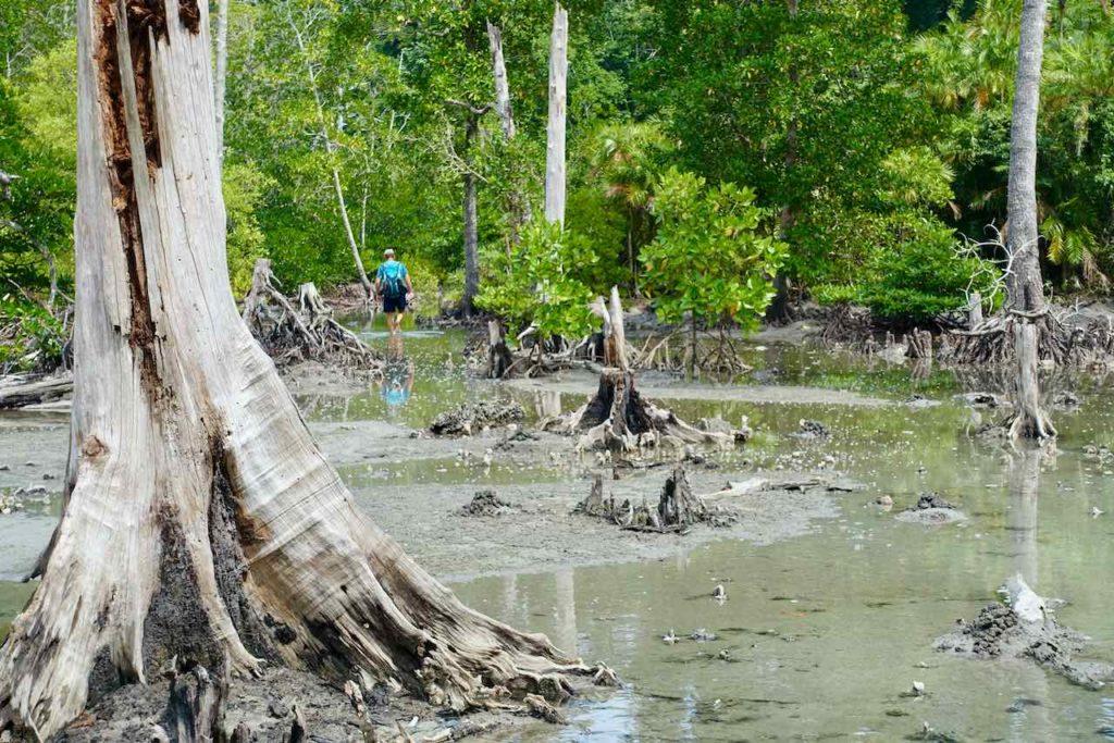 Andamanen, Havelock Island: Weg zum Elephant Beach