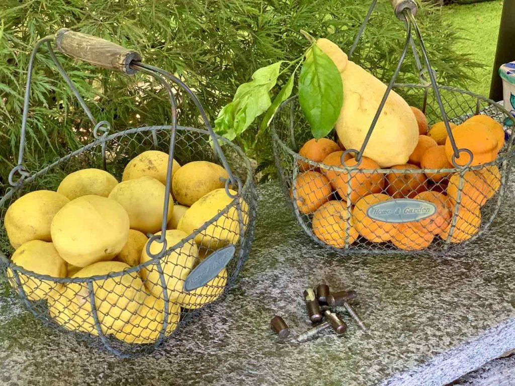 Zitrusfrüchte in Cannero Riviera