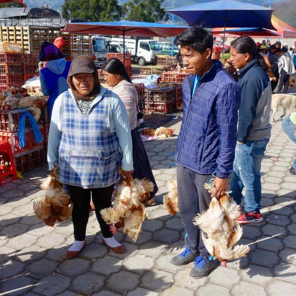 Geflügelverkäufer auf dem Viehmarkt bei Otavalo