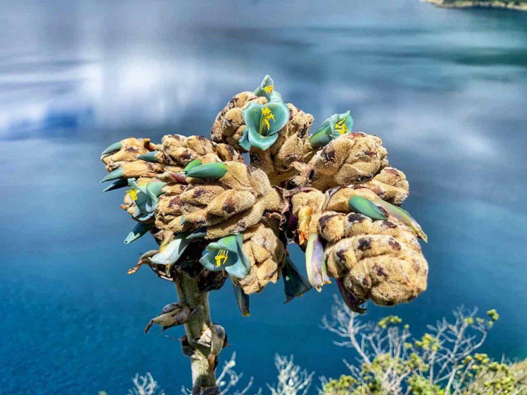 Unterwegs um die Lagune Cuicocha