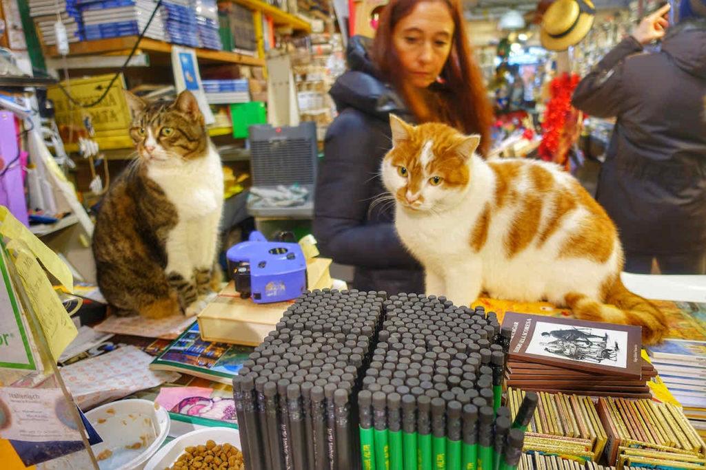 Katzen in der Buchhandlung Libreria Acqua Alta, Venedig